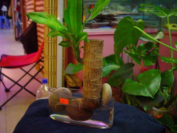 常见的水培植物营养液配方