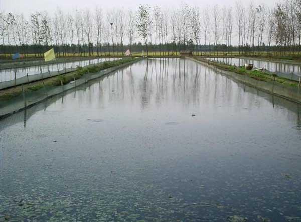 泥鳅养殖池的建造方法