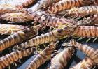 虾的营养价值