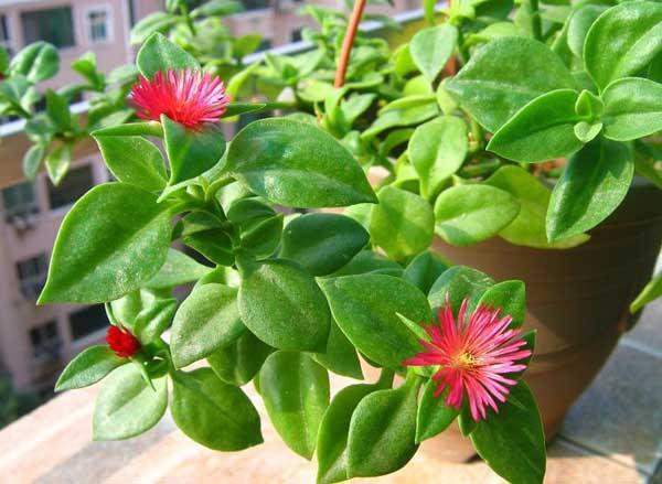 吸甲醛的植物有哪些?