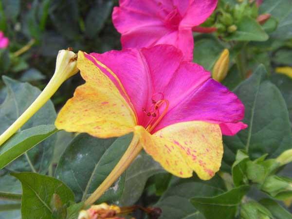 防火图标驱蚊植物有哪些? - 农业问答- 黔农网防火門規範