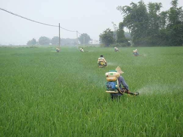夏季使用农药要注意哪些问题?