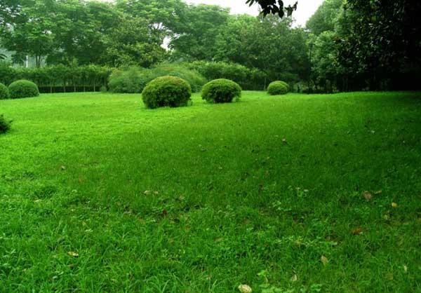 草坪种植技术