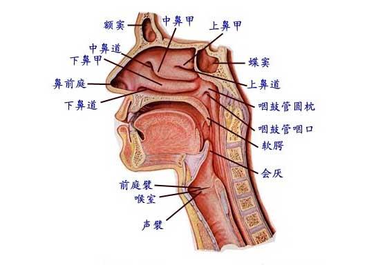 慢性咽喉炎的病因及预防方法
