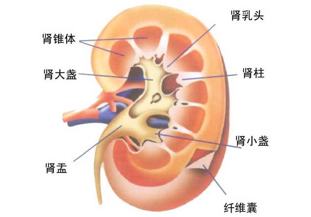 肾结石患者的饮食禁忌