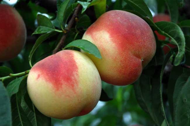 夏天吃什么水果最好?