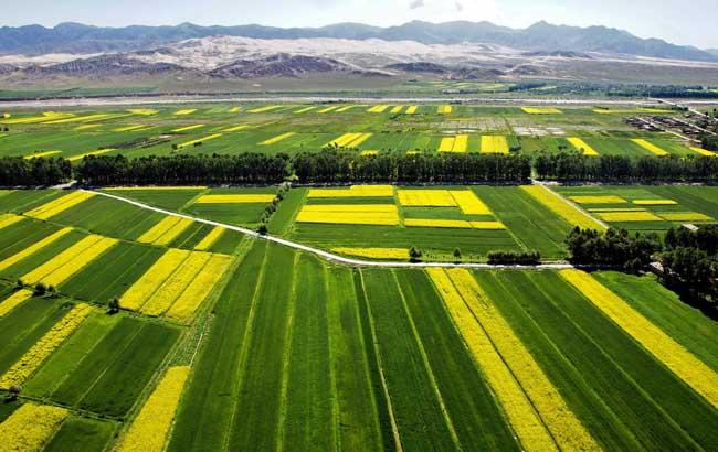 农业安全生产综合知识