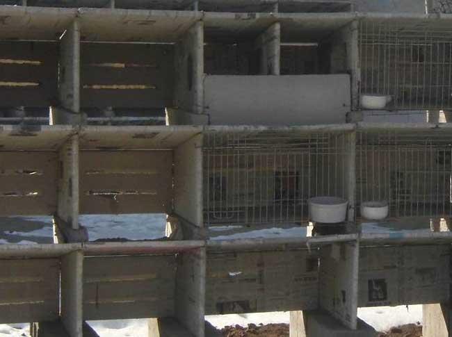 兔子养殖场建筑布局