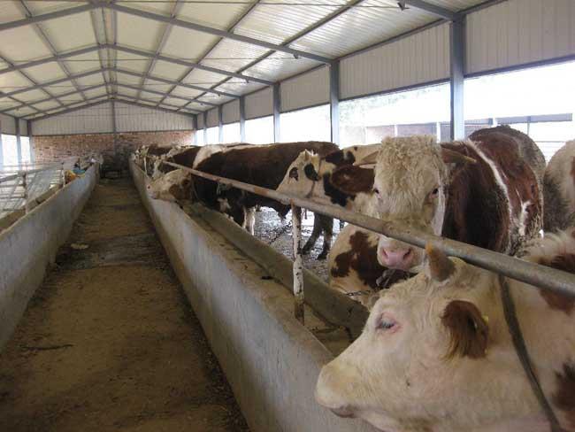 架子牛养殖场的建设方案