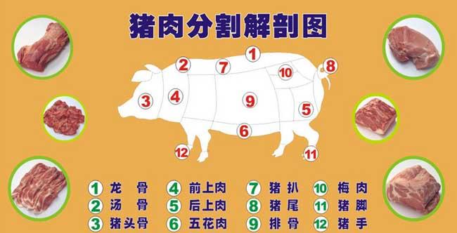 猪肉分割解剖图