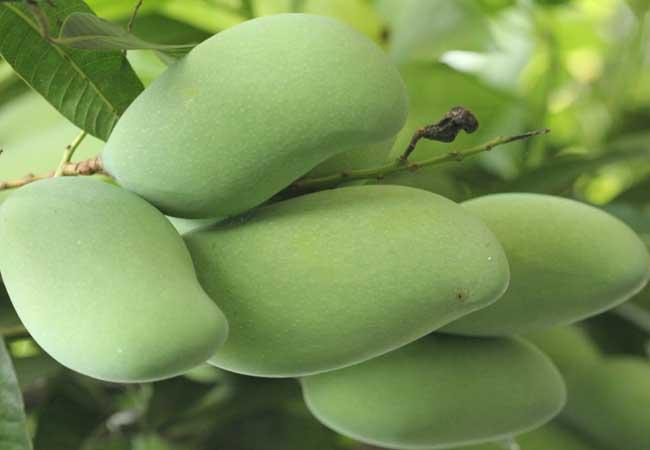 芒果吃多了会怎么样?