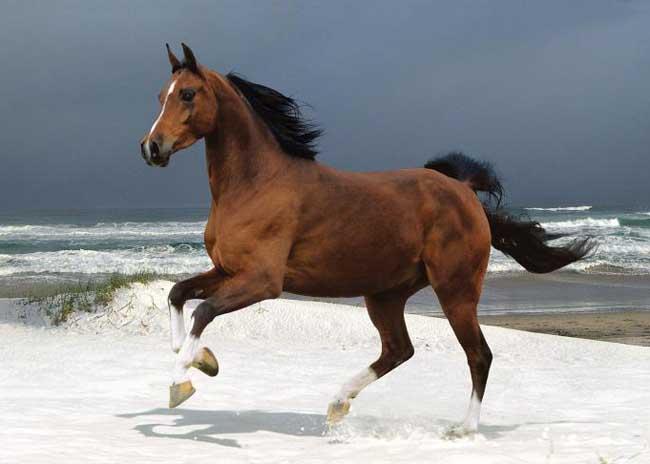 如何提高马繁殖力?