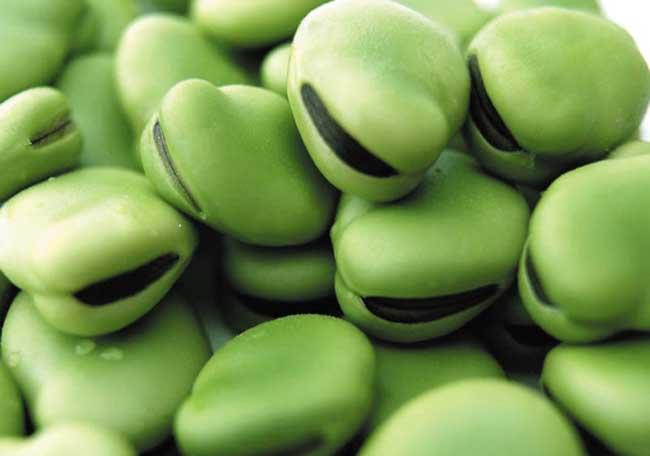 蚕豆病的病因及治疗方法