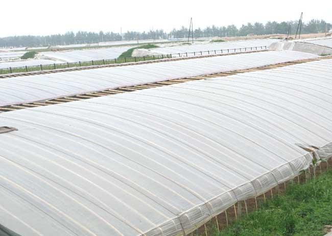 蔬菜大棚的建设技术