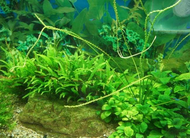 水草鱼缸造景的一些常见方法