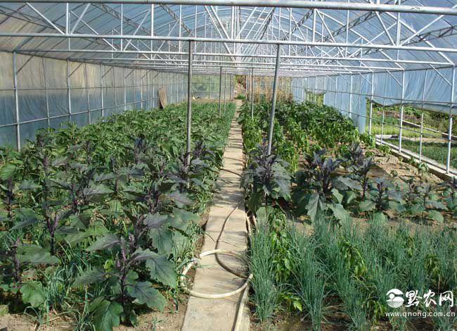 大棚蔬菜种植利润