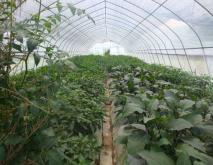 大棚蔬菜种植技术视频