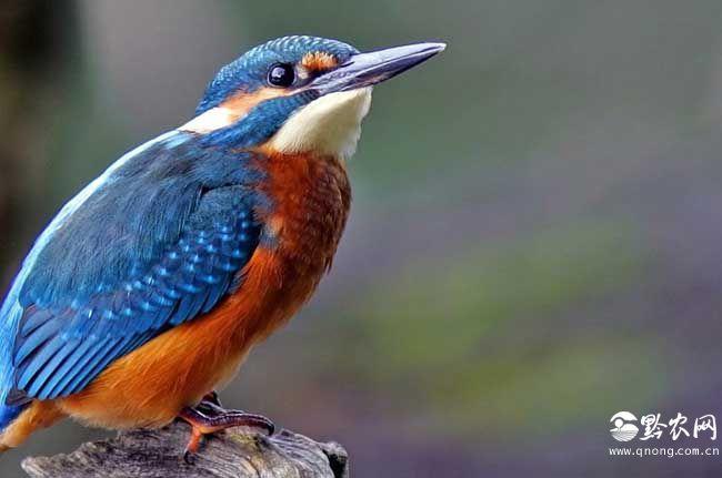 你知道禽类有哪些吗?
