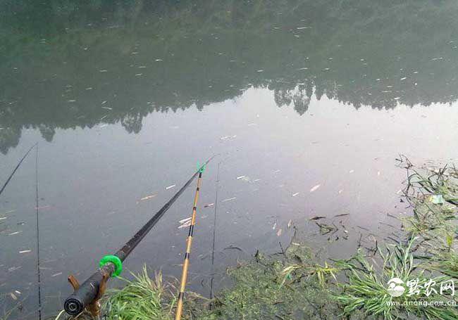 南方冬季钓鱼技巧有哪些?