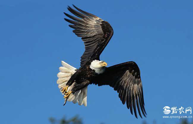 鸟类尾巴的作用