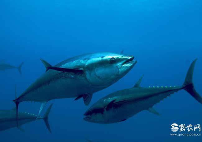 世界上十大捕捞之最