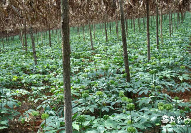 农业产业化