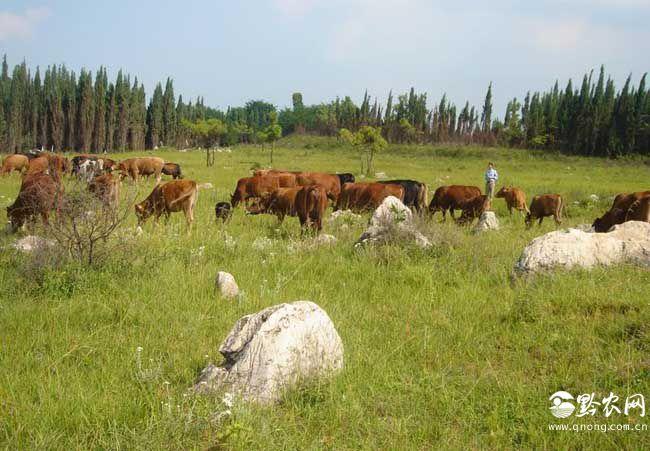 什么是生态养殖?