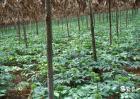 农业产业化的基本特征