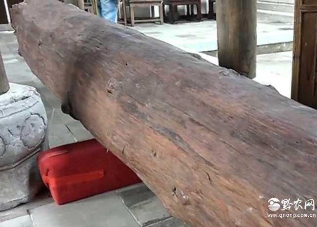 上海现黄金木价值两个亿