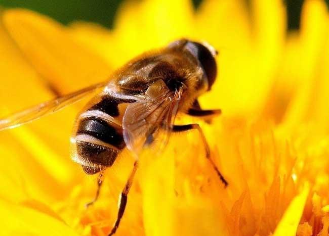 蜜蜂养殖技术视频