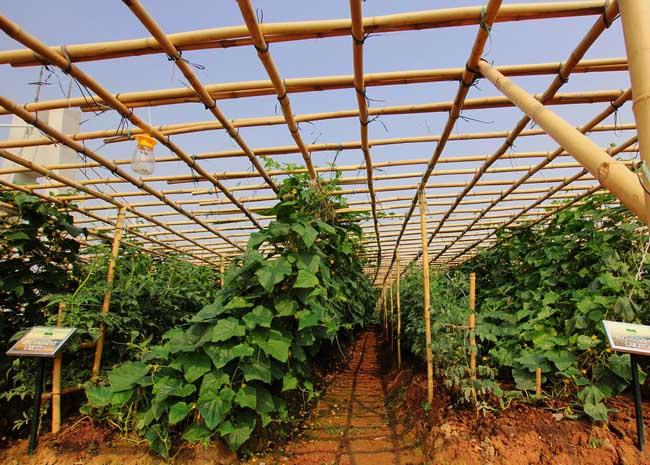 2015年种植什么最赚钱?
