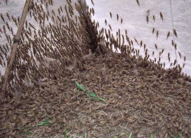 昆虫养殖前景怎么样?