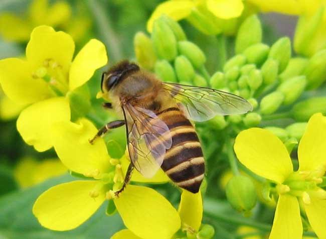 昆虫图片欣赏