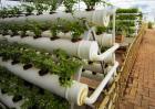 常见的无土栽培的植物有哪些?
