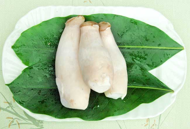 几种常见的杏鲍菇的做法