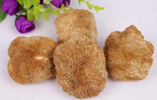 猴头菇图片