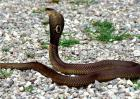 我国十大毒蛇排行榜