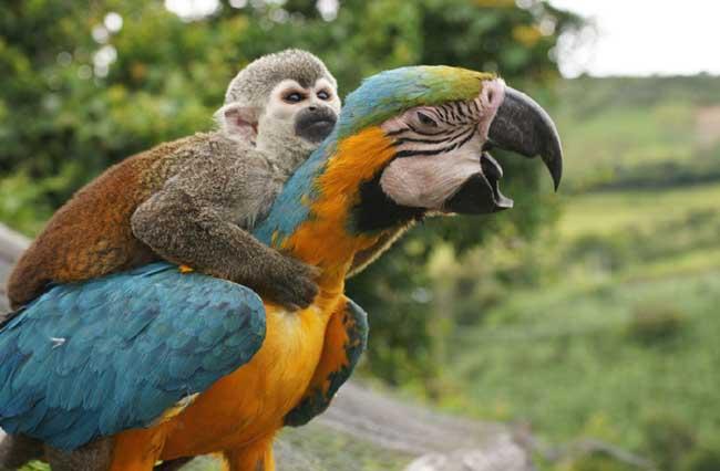 一只小猴子骑在一只大鹦鹉的背上