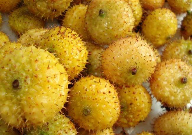 最新贵州刺梨的市场价格
