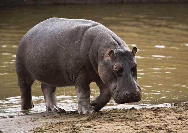 世界上最大的动物
