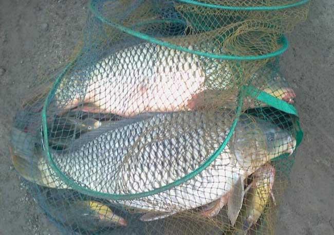 钓鲤鱼技巧及饵料配方