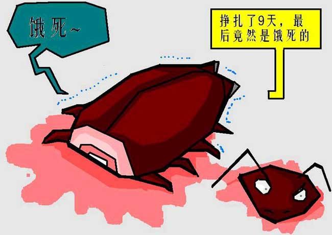 蟑螂为什么叫小强?