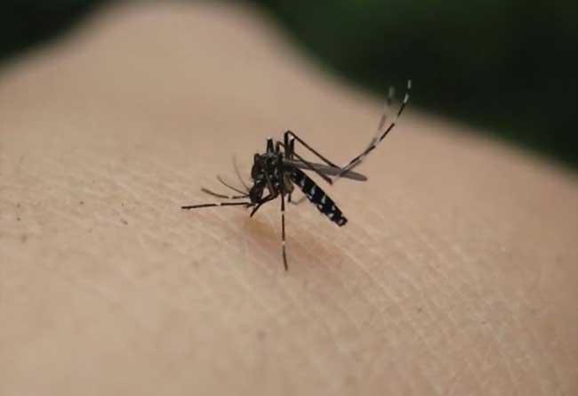 世界上最大的蚊子_什么血型最招蚊子
