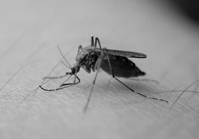 您知道蚊子怕什么吗?