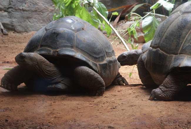 世界上最大的乌龟