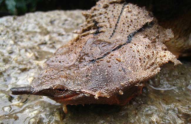 玛塔玛塔龟
