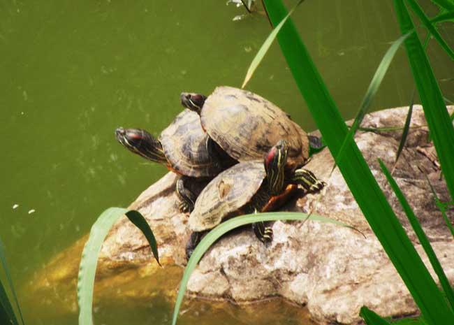 乌龟吃什么食物?