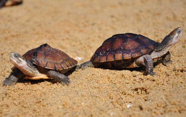 乌龟的种类有哪些?