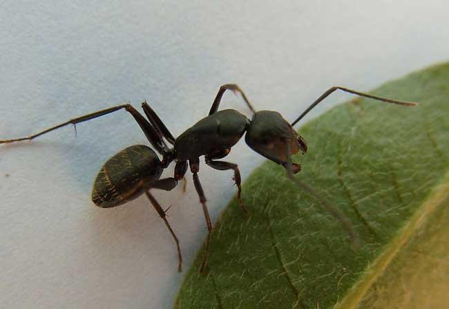 被蚂蚁咬了怎么办?