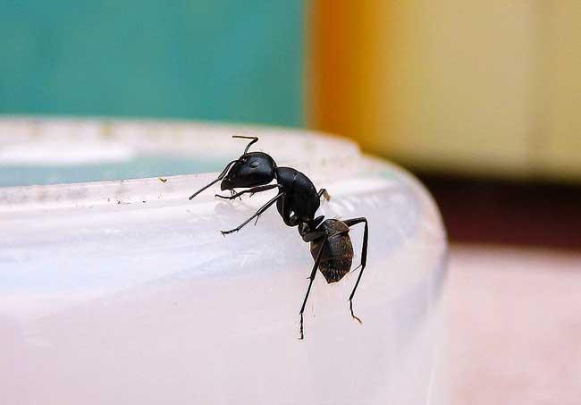 家里有蚂蚁怎么办?